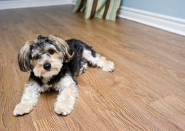 Parquet and dogs