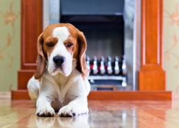 Pet Urine on Hardwood Floors