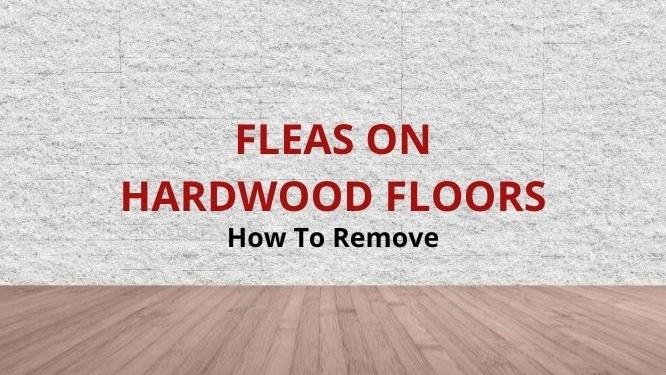 get rid of fleas on hardwood floors